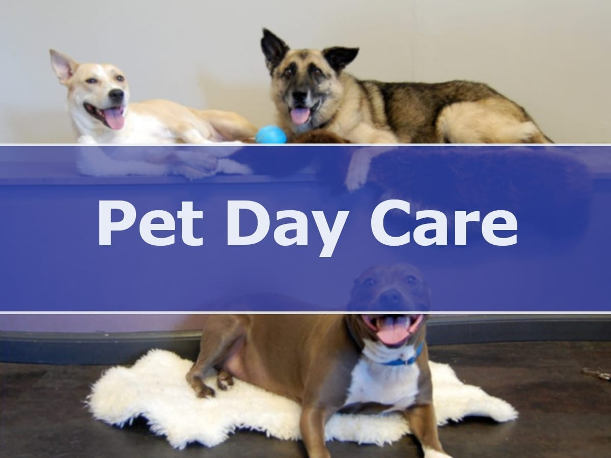 Dog Day Care in Washington DC